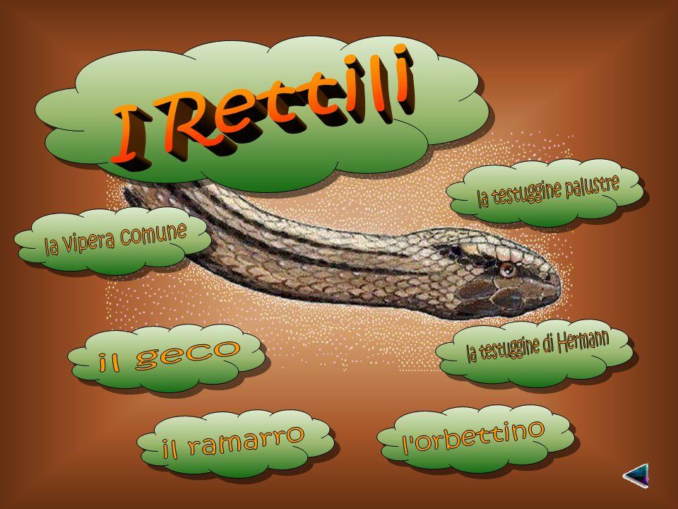 la testuggine palustre la vipera comune