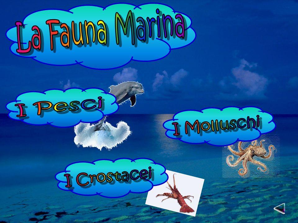 La Fauna Marina I Pesci I Molluschi I Crostacei