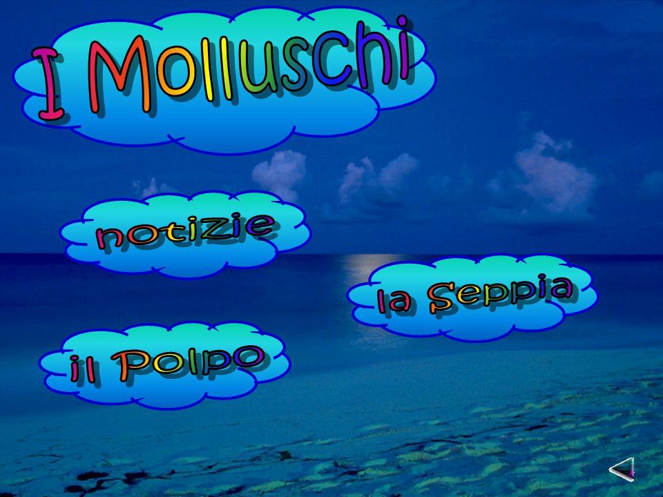 I Molluschi notizie la Seppia il Polpo