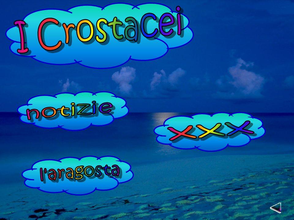 I Crostacei notizie xxx l aragosta