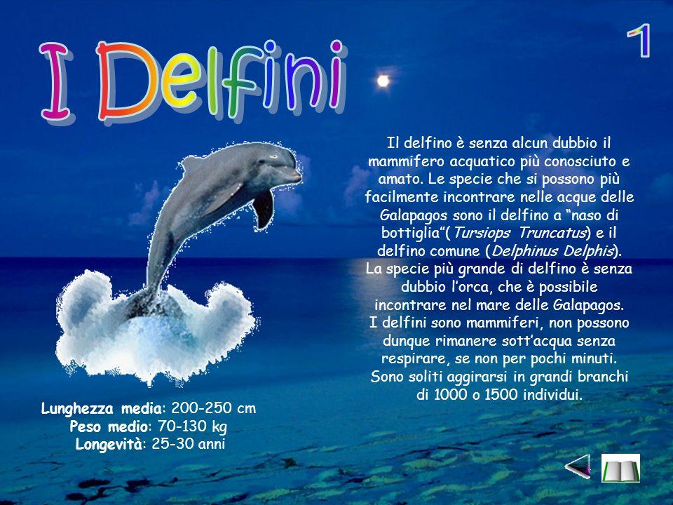 1 I Delfini.