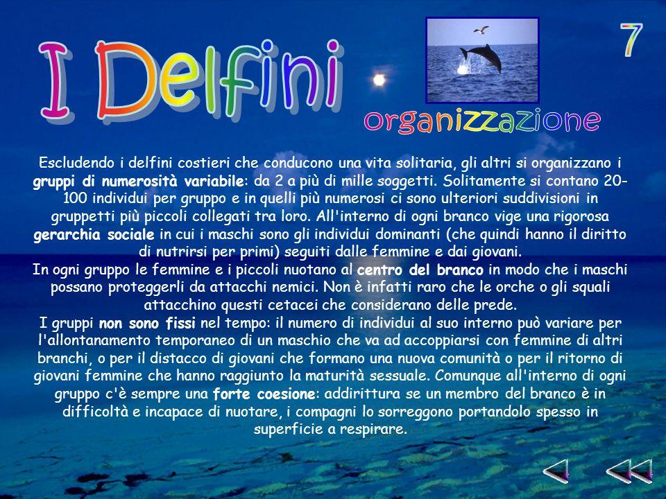 7 I Delfini organizzazione