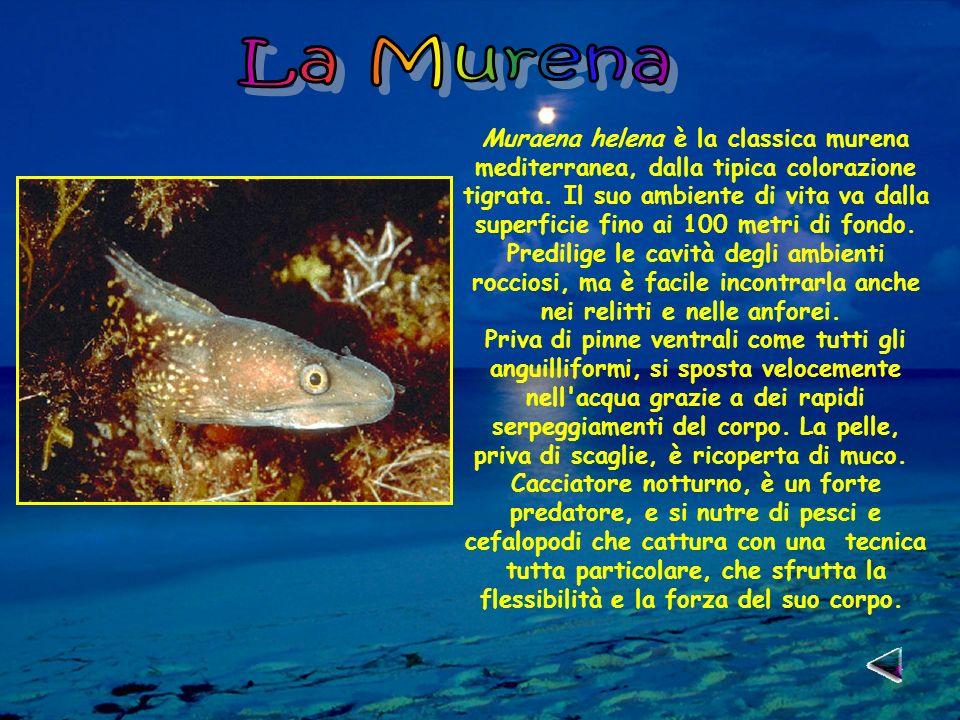 La Murena