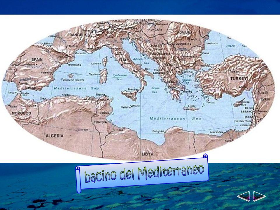 bacino del Mediterraneo