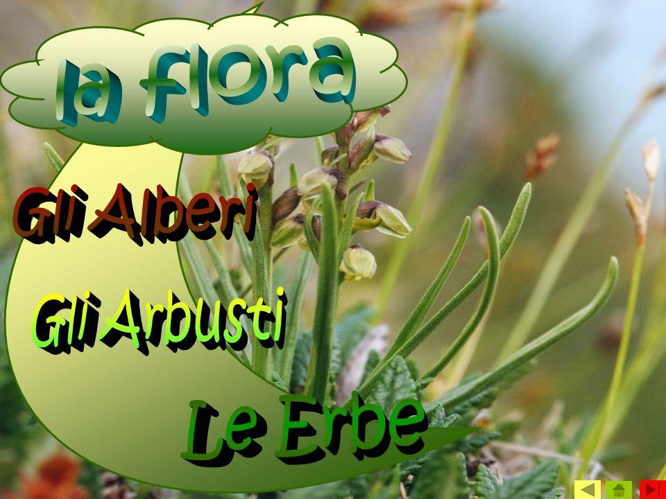 la flora Gli Alberi Gli Arbusti Le Erbe
