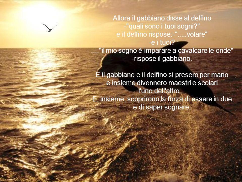 Allora il gabbiano disse al delfino - quali sono i tuoi sogni