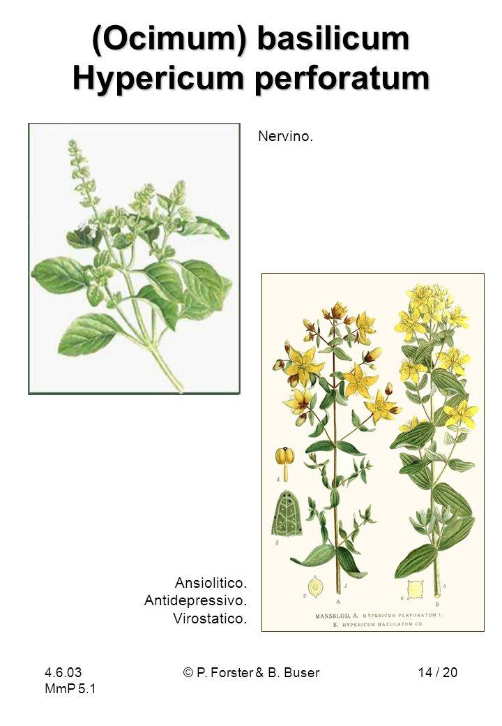 (Ocimum) basilicum Hypericum perforatum