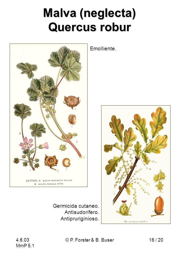 Malva (neglecta) Quercus robur