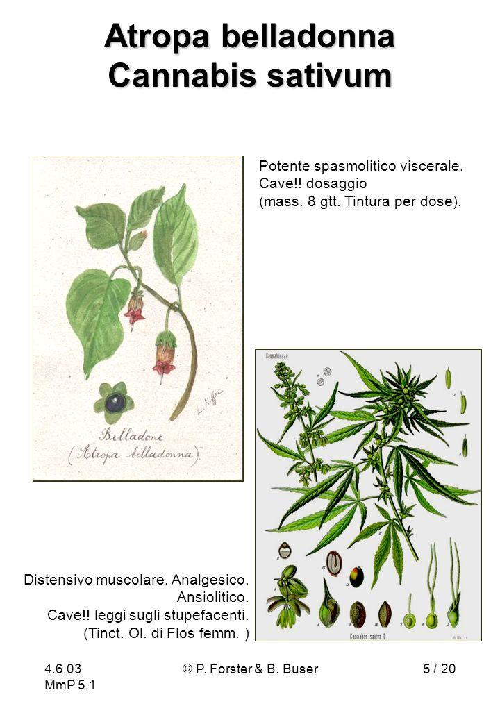 Atropa belladonna Cannabis sativum