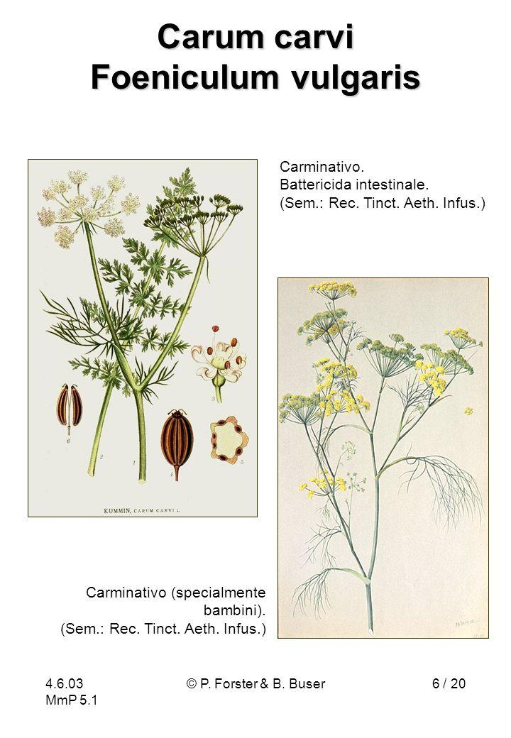 Carum carvi Foeniculum vulgaris