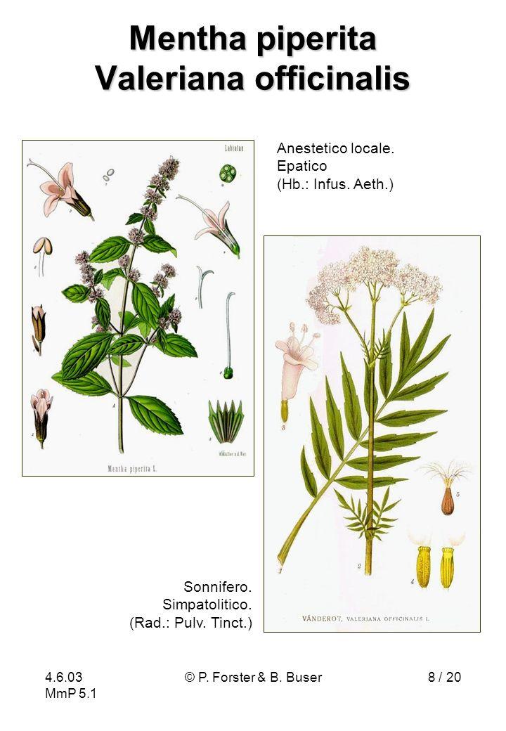 Mentha piperita Valeriana officinalis