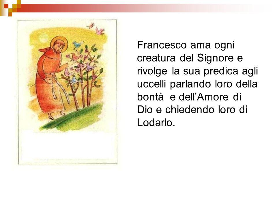 Francesco ama ogni creatura del Signore e rivolge la sua predica agli uccelli parlando loro della bontà e dell'Amore di Dio e chiedendo loro di Lodarlo.
