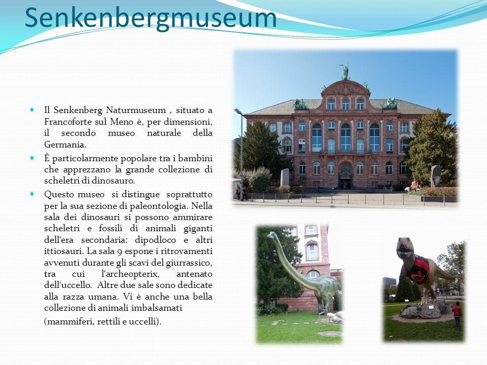 Senkenbergmuseum Il Senkenberg Naturmuseum , situato a Francoforte sul Meno è, per dimensioni, il secondo museo naturale della Germania.