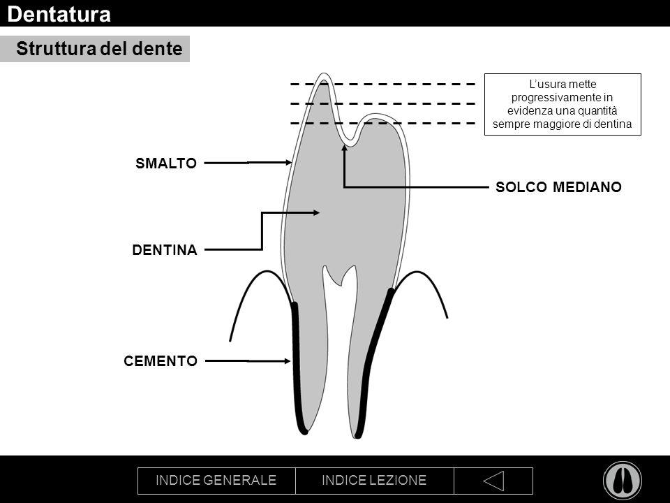 Dentatura Struttura del dente SMALTO SOLCO MEDIANO DENTINA CEMENTO
