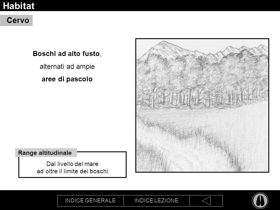 Habitat Cervo Boschi ad alto fusto, alternati ad ampie aree di pascolo