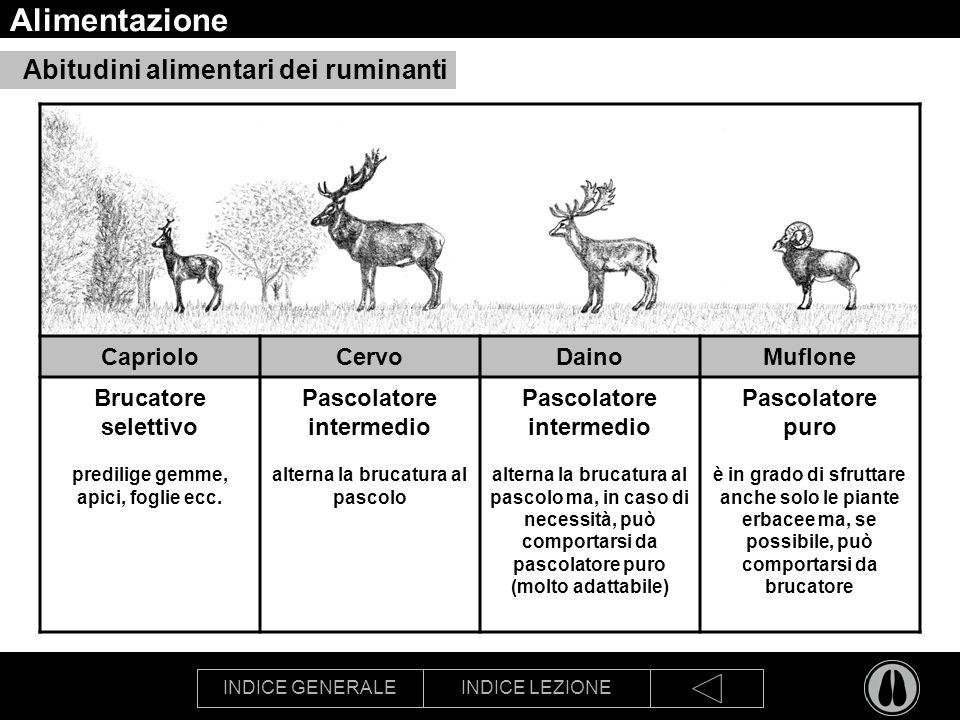 Alimentazione Abitudini alimentari dei ruminanti Capriolo Cervo Daino