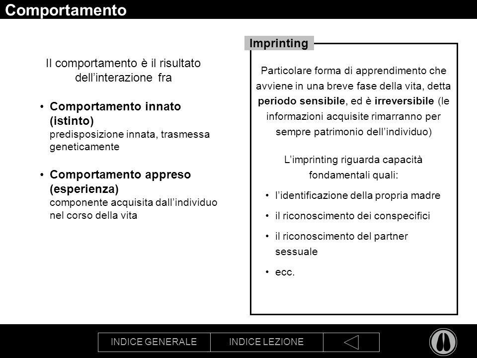 Comportamento Imprinting