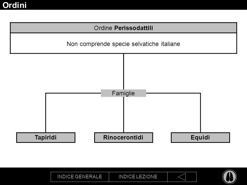 Ordini Ordine Perissodattili Non comprende specie selvatiche italiane