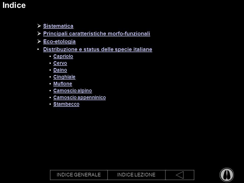 Indice Sistematica Principali caratteristiche morfo-funzionali