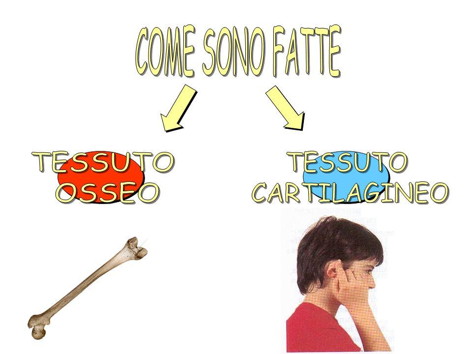 COME SONO FATTE TESSUTO OSSEO TESSUTO CARTILAGINEO
