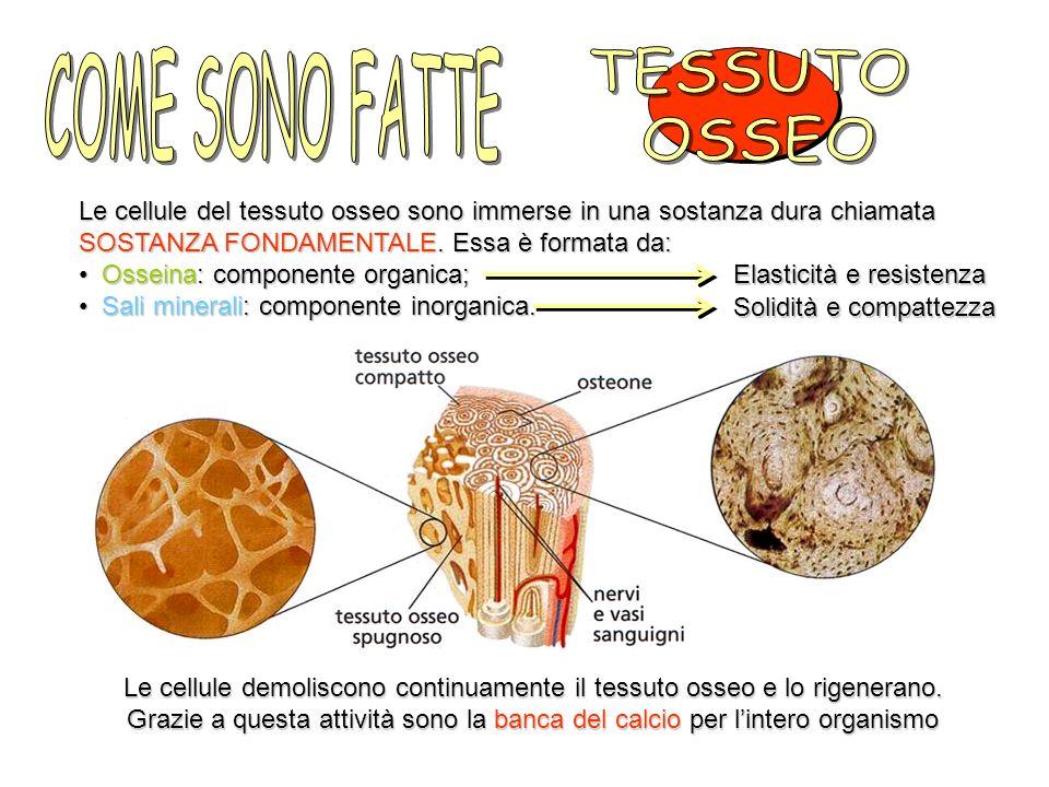 COME SONO FATTE TESSUTO OSSEO