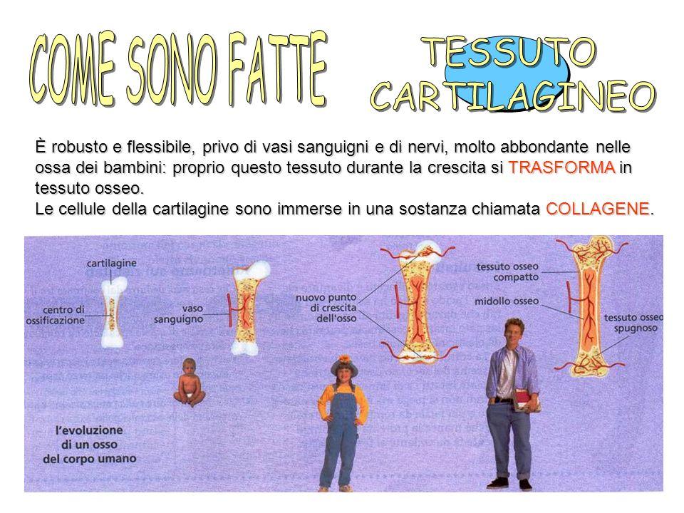 COME SONO FATTE TESSUTO CARTILAGINEO