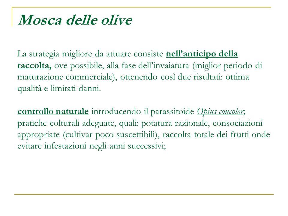 Mosca delle olive La strategia migliore da attuare consiste nell'anticipo della raccolta, ove possibile, alla fase dell'invaiatura (miglior periodo di maturazione commerciale), ottenendo così due risultati: ottima qualità e limitati danni.