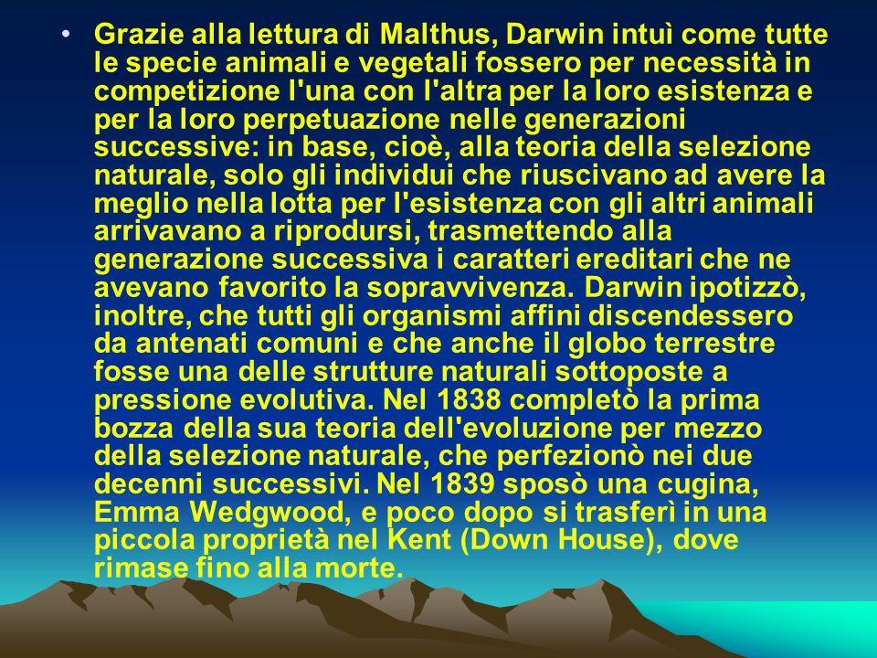 Grazie alla lettura di Malthus, Darwin intuì come tutte le specie animali e vegetali fossero per necessità in competizione l una con l altra per la loro esistenza e per la loro perpetuazione nelle generazioni successive: in base, cioè, alla teoria della selezione naturale, solo gli individui che riuscivano ad avere la meglio nella lotta per l esistenza con gli altri animali arrivavano a riprodursi, trasmettendo alla generazione successiva i caratteri ereditari che ne avevano favorito la sopravvivenza.