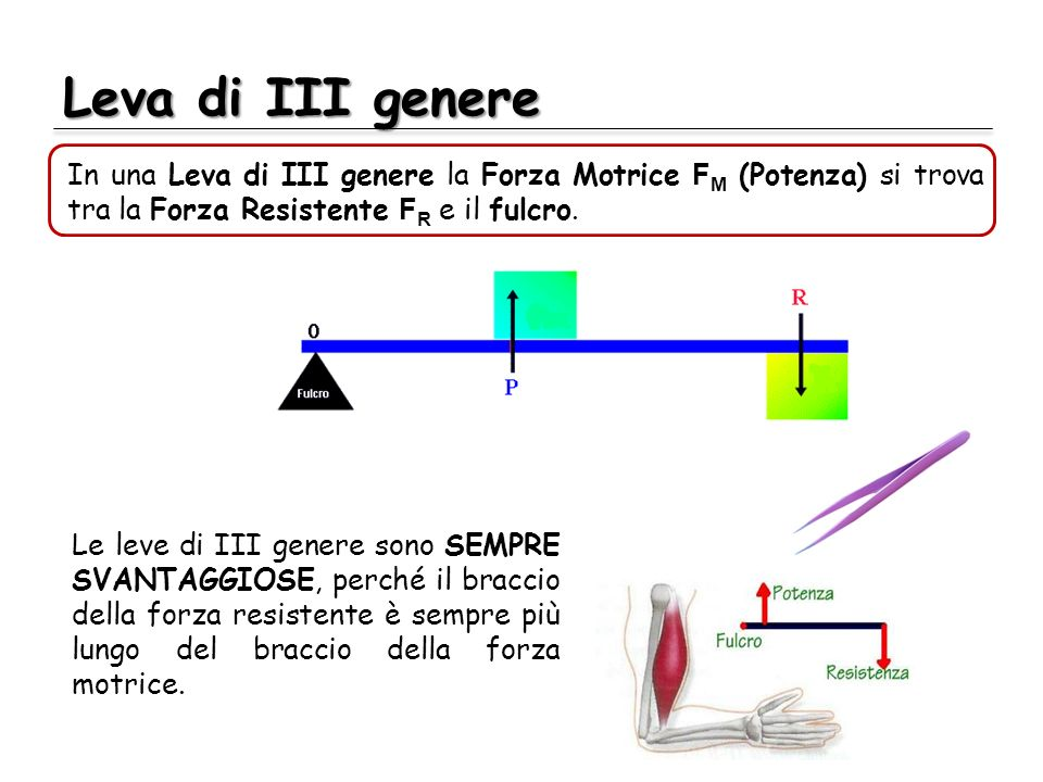 Leva di III genere In una Leva di III genere la Forza Motrice FM (Potenza) si trova tra la Forza Resistente FR e il fulcro.