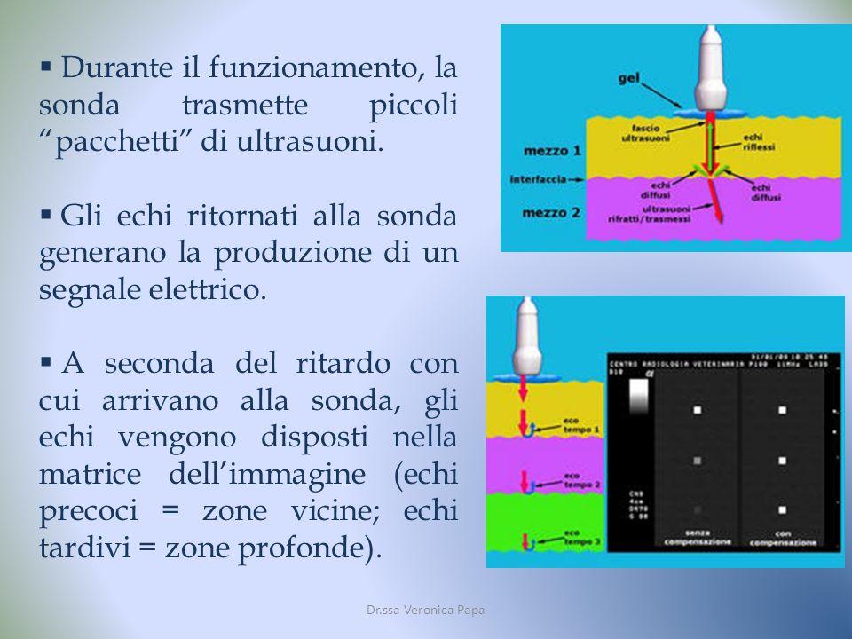 Durante il funzionamento, la sonda trasmette piccoli pacchetti di ultrasuoni.