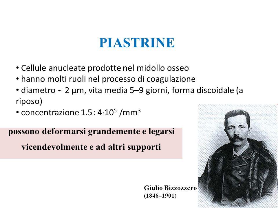 PIASTRINE Cellule anucleate prodotte nel midollo osseo. hanno molti ruoli nel processo di coagulazione.