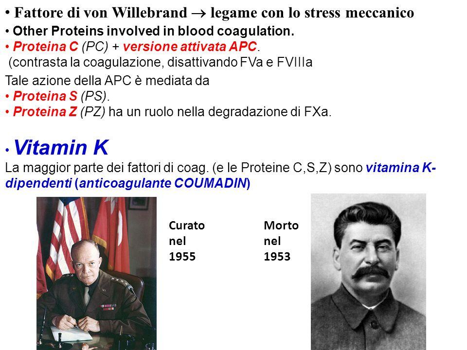 Fattore di von Willebrand  legame con lo stress meccanico