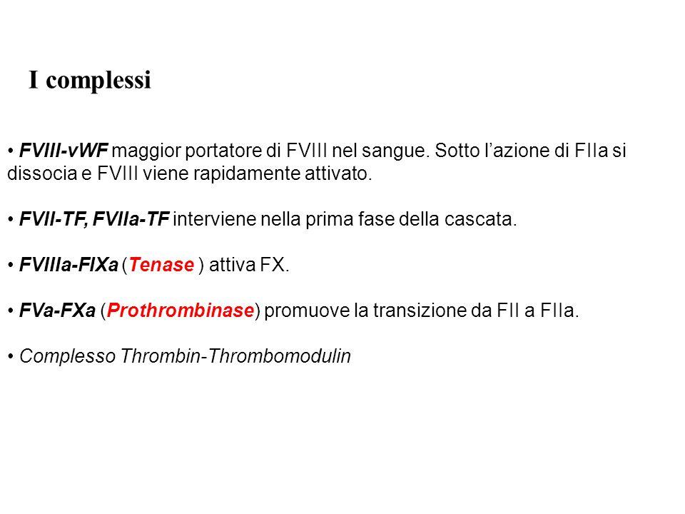 I complessi FVIII-vWF maggior portatore di FVIII nel sangue. Sotto l'azione di FIIa si dissocia e FVIII viene rapidamente attivato.
