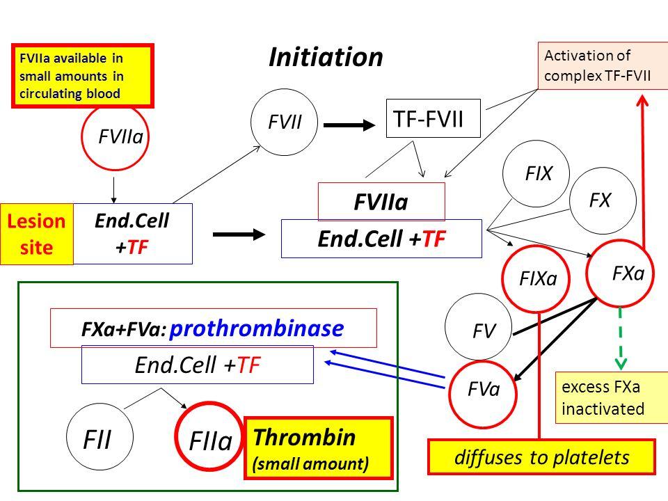 FXa+FVa: prothrombinase