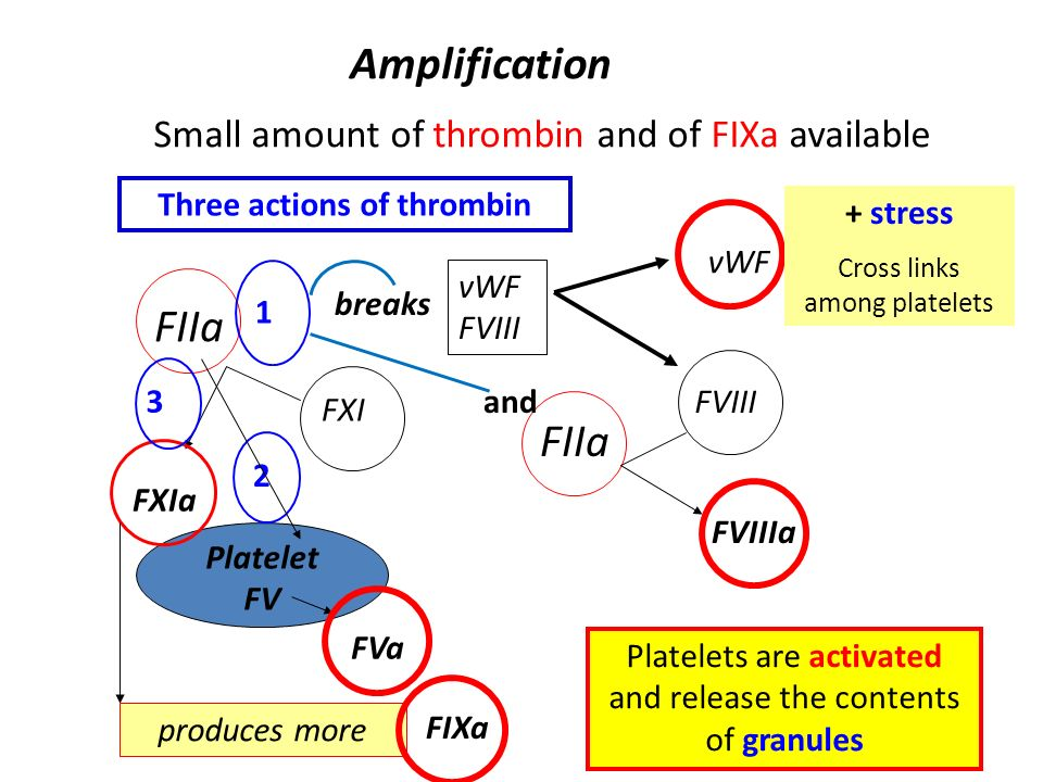 Three actions of thrombin
