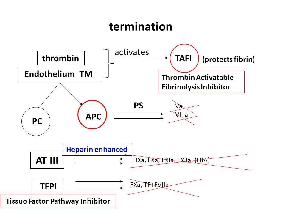 Tissue Factor Pathway Inhibitor
