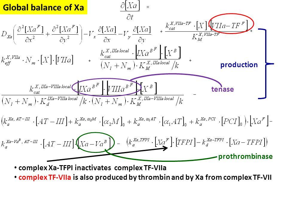 Global balance of Xa production tenase prothrombinase
