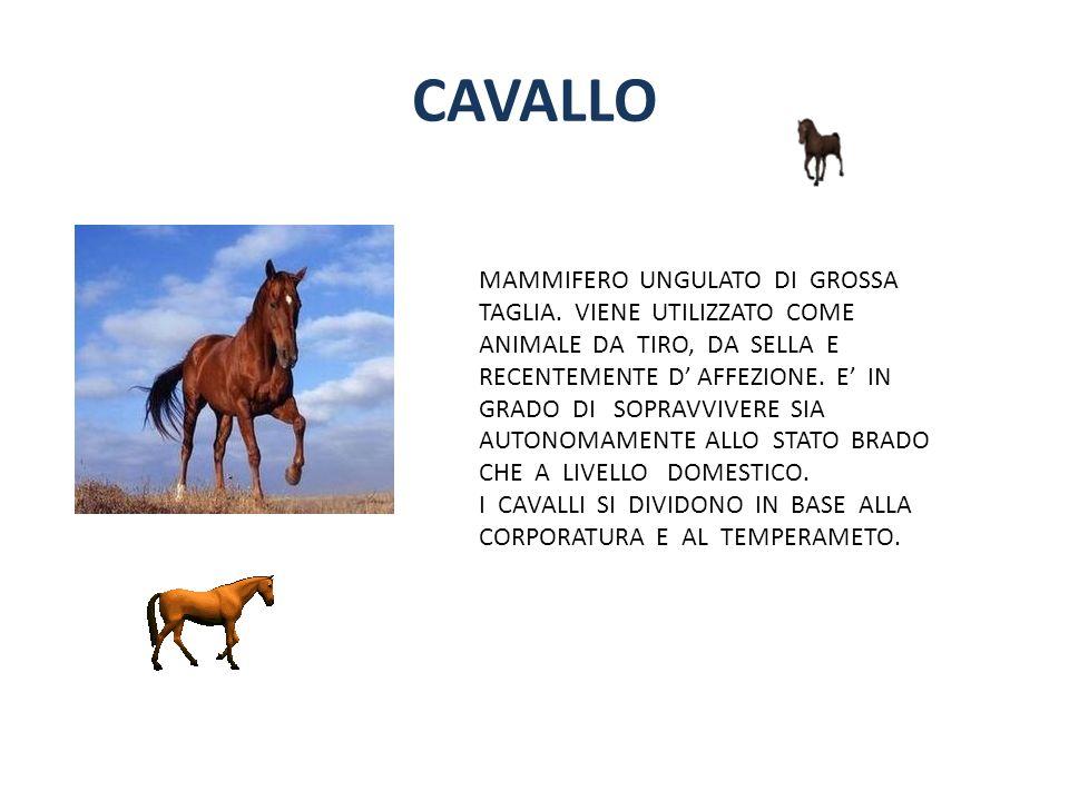 CAVALLO MAMMIFERO UNGULATO DI GROSSA TAGLIA. VIENE UTILIZZATO COME