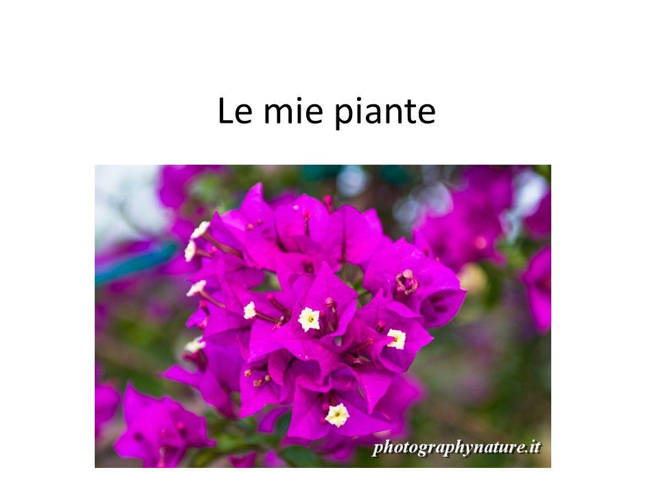 Le mie piante