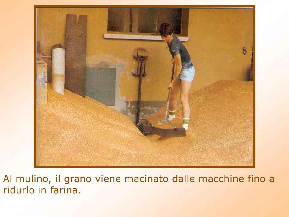 Al mulino, il grano viene macinato dalle macchine fino a ridurlo in farina.