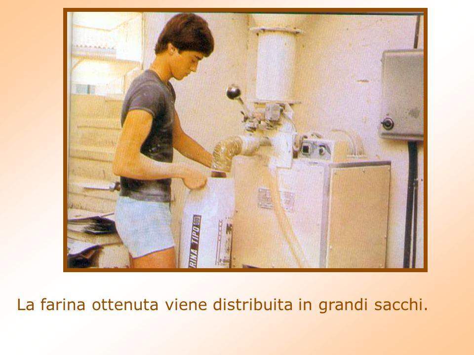 La farina ottenuta viene distribuita in grandi sacchi.