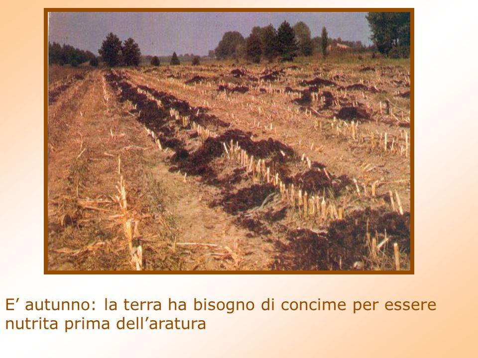 E' autunno: la terra ha bisogno di concime per essere nutrita prima dell'aratura