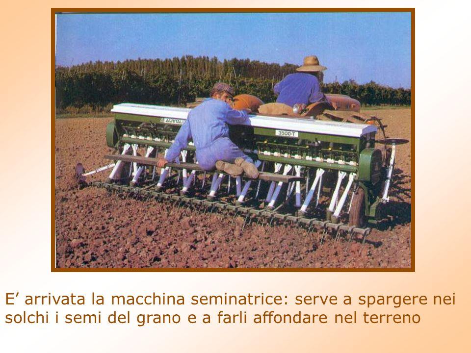 E' arrivata la macchina seminatrice: serve a spargere nei solchi i semi del grano e a farli affondare nel terreno
