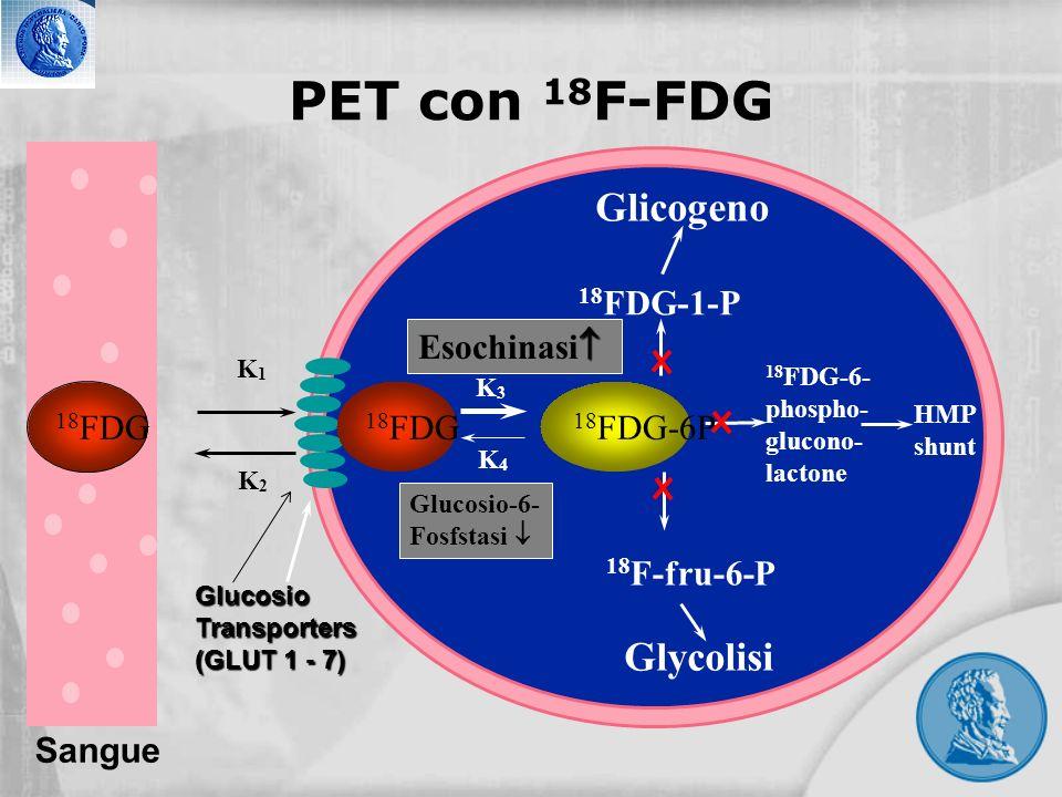 PET con 18F-FDG Glicogeno Glycolisi 18FDG-1-P Esochinasi 18FDG 18FDG