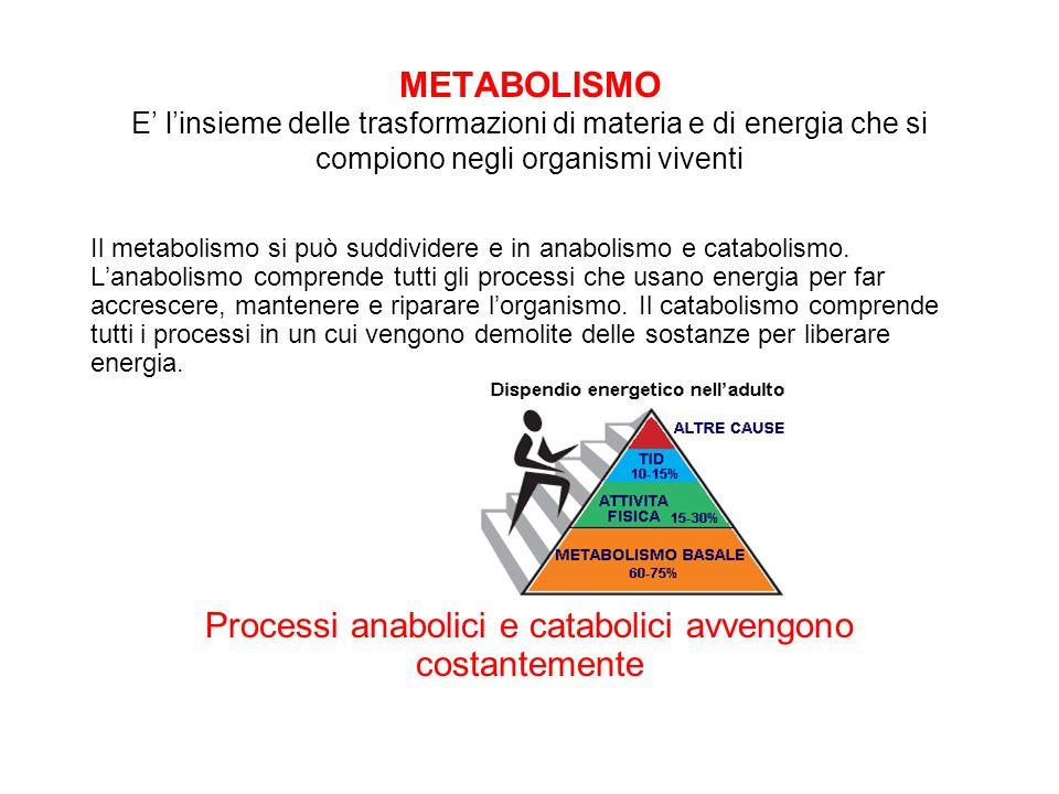 Processi anabolici e catabolici avvengono costantemente