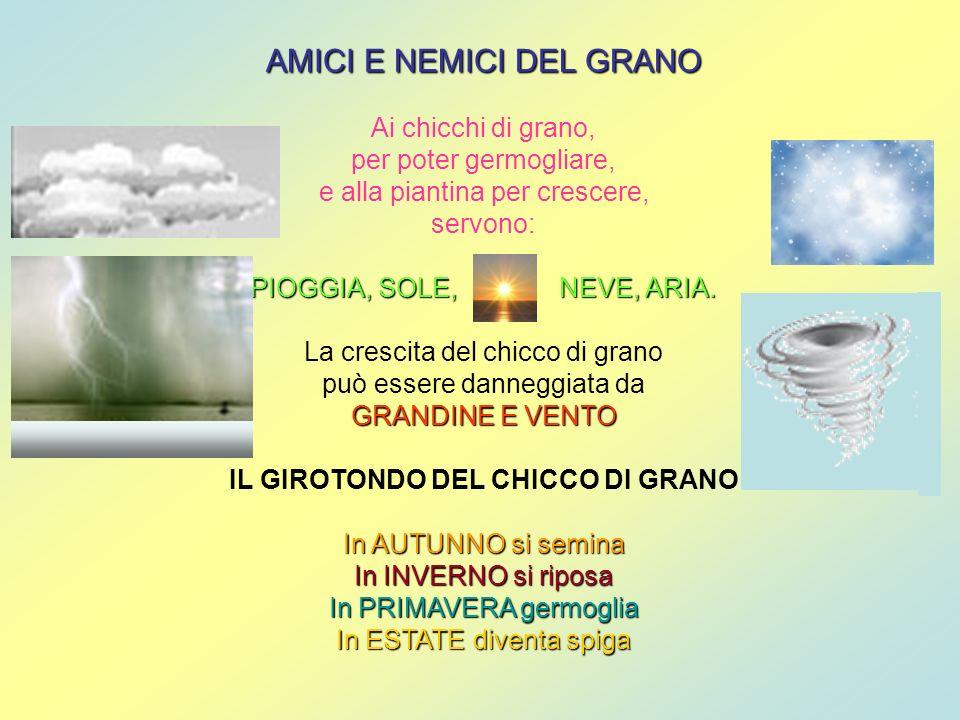 IL GIROTONDO DEL CHICCO DI GRANO