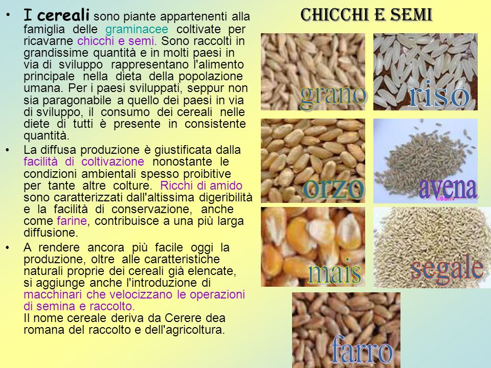 riso grano orzo avena segale mais farro Chicchi e semi