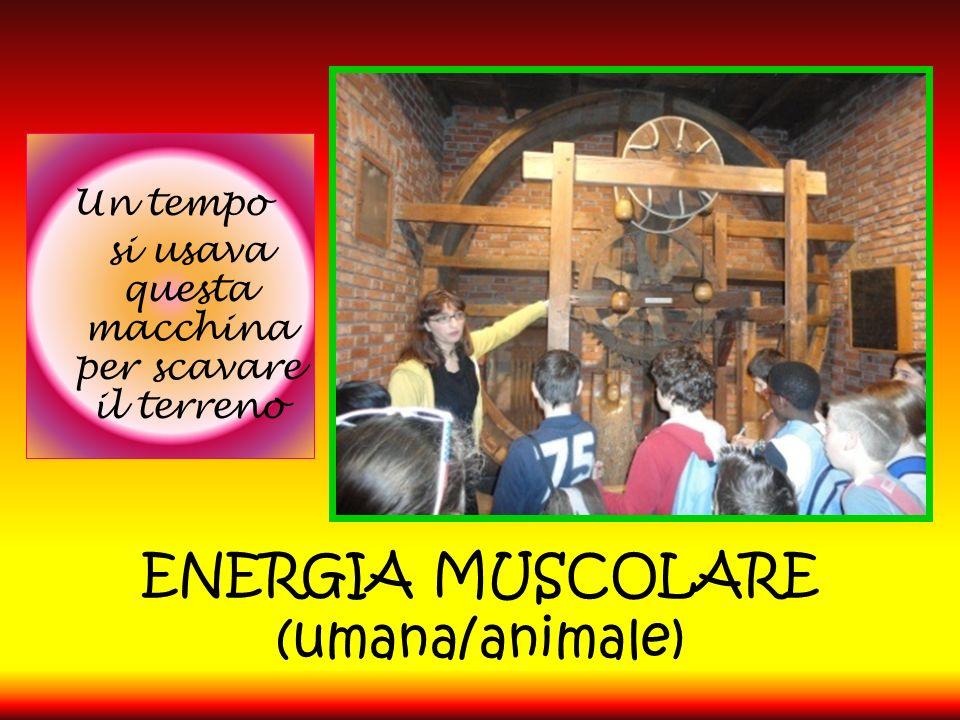 ENERGIA MUSCOLARE (umana/animale)