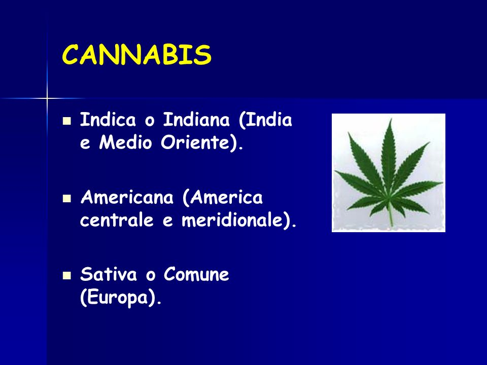 CANNABIS Indica o Indiana (India e Medio Oriente).