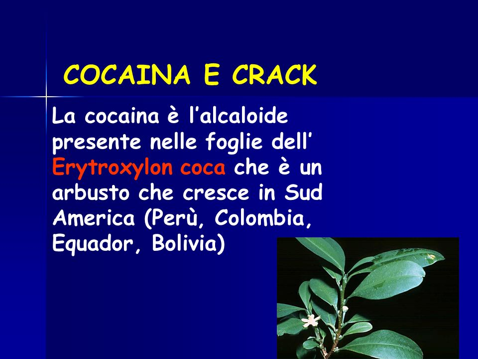 COCAINA E CRACK